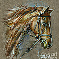 My Horse Face Drawing by Daliana Pacuraru