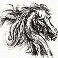 Horse Face Ink Sketch Drawing - Inventing A Horse by Daliana Pacuraru