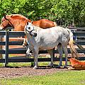Horse Family by Mary Almond