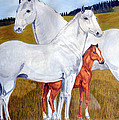 Horse Family by Teresa  Peterson