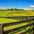 Horse Farm Fences by Alexey Stiop