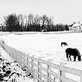 Horse Farm In Winter by Jim Culler