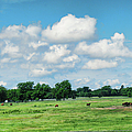 Horse Farm - Oklahoma by Paulette B Wright
