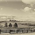 Horse Farm Sepia by Steve Harrington