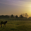 Horse Farm Sunrise by Bill Cannon