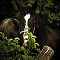Horse Fence by Shane Holsclaw