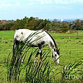 Horse Grazing In Field by Rose Santuci-Sofranko