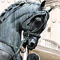 Horse Head by Borislav Marinic