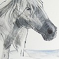 Horse Head Drawing by Mike Jory