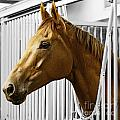 Horse Head by Gail  Turner