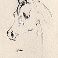 Horse Head Sketch by Angel Ciesniarska