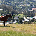 Horse Hill Mill Valley California 5d22663 by Wingsdomain Art and Photography