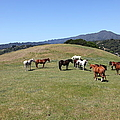 Horse Hill Mill Valley California 5d22673 by Wingsdomain Art and Photography