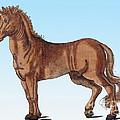 Horse Historiae Animalium  by Science Source