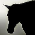 Horse Illusion by John Cardamone