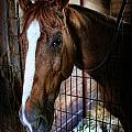 Horse In A Box Stall - Horse Stable by Lee Dos Santos