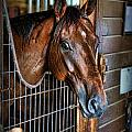 Horse In A Box Stall II - Horse Stable by Lee Dos Santos