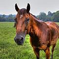 Horse In A Field by Jonny D