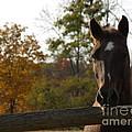Horse in Autumn Light