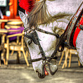 Horse In Cracow by Pati Photography