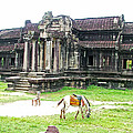 Horse In Front Of Outer Building In Angkor Wat In Angkin Angkor Wat Archeological Park-cambodia by Ruth Hager