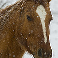 Horse In Snow   #4651 by J L Woody Wooden