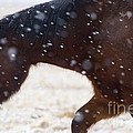 Horse In Snow   #5425 by J L Woody Wooden