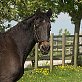 Horse In Spring by Linsey Williams