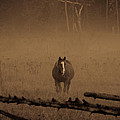 Horse In The Mist by Cheryl Baxter