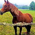 Horse In The Pasture by Pamela Walton