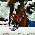Horse In The Snow by Bruce Nutting