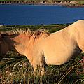 Horse In Wildflower Landscape by Aidan Moran