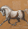 Horse Is Beautiful # 4 by House Brasil