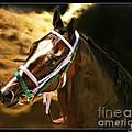 Horse Last Memories by Blake Richards