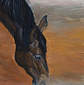 horse - Lily by Go Van Kampen