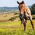 Horse by Mesaros Ronel