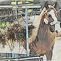 Horse N Hay by Alice Gipson