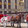 Horse Needs Water In Old Montreal-quebec-canada by Ruth Hager