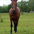 Horse by Nicki Bennett