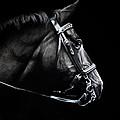 Horse No. 2 by Kimberly VanDenBerg