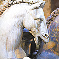 Horse Of Neptune by Terry J Alcorn