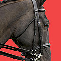 Horse On Red by Linsey Williams