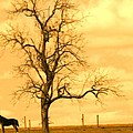 Horse On The Hill by Alice Gipson