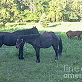 Horse Pasture by Troy Chevalier