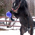 Horse Playing Ball by Line Gagne