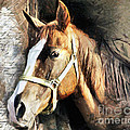 Horse Portrait - Drawing by Daliana Pacuraru