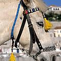 Horse Portrait by George Atsametakis