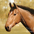 Horse Portrait II by John Silver
