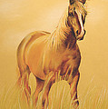 Horse Portrait by Tamer and Cindy Elsharouni