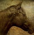 Horse Portriat by Lou  Novick